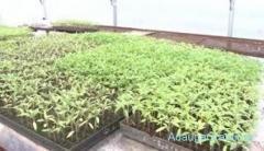 Plantat legume Danemarca/ 2000 euro